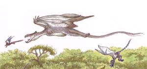 Accipiptero